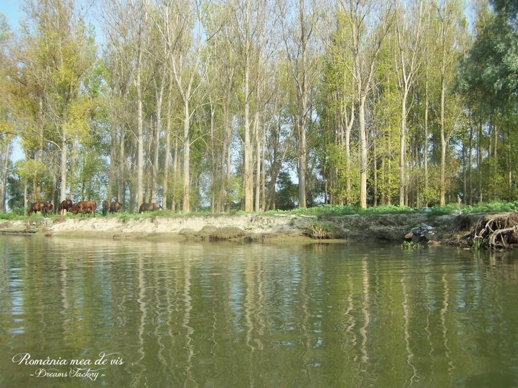 WILD HORSES, DANUBE DELTA / CAI SALBATICI, DELTA DUNARII, ROMANIA | DREAMS FACTORY