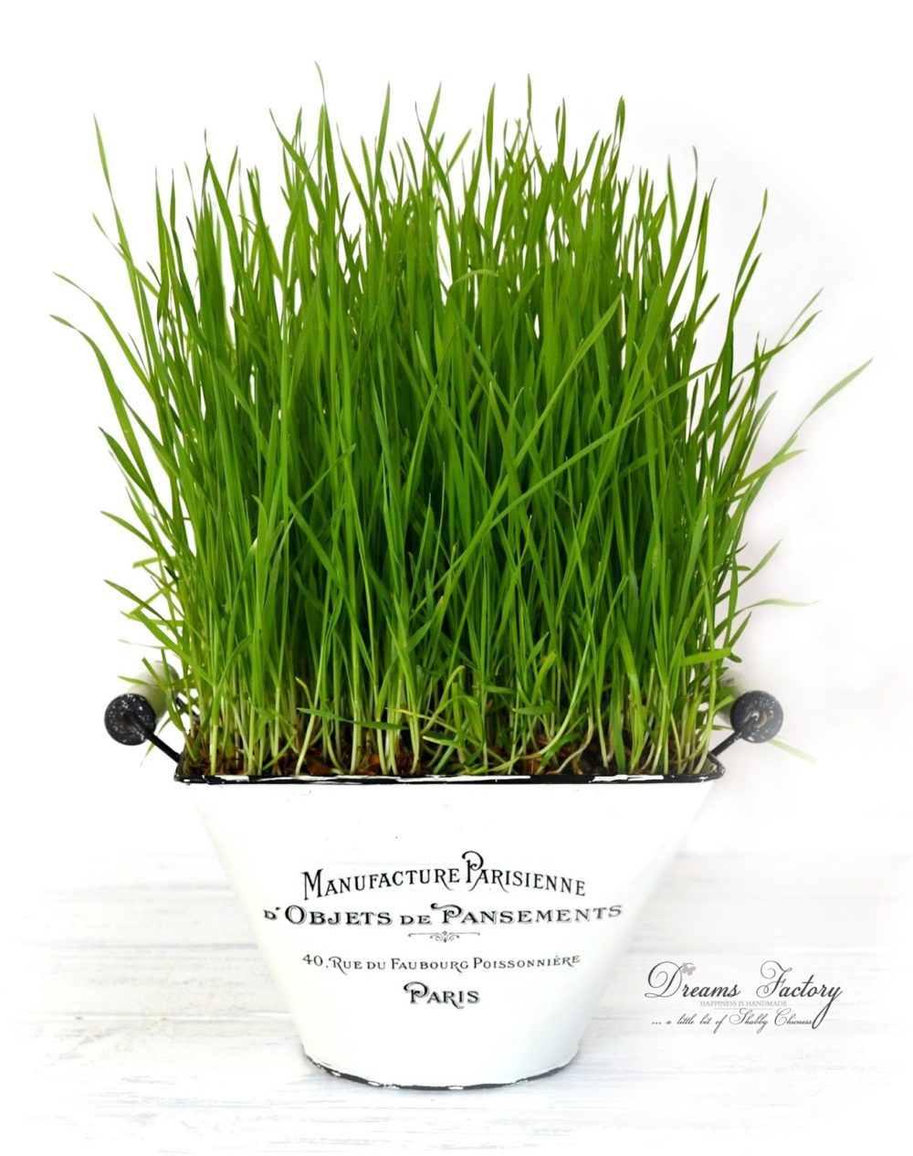 Learn how to grow wheatgrass for juicing and decorating