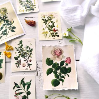 DIY Botanical Labels – with 3 types of borders