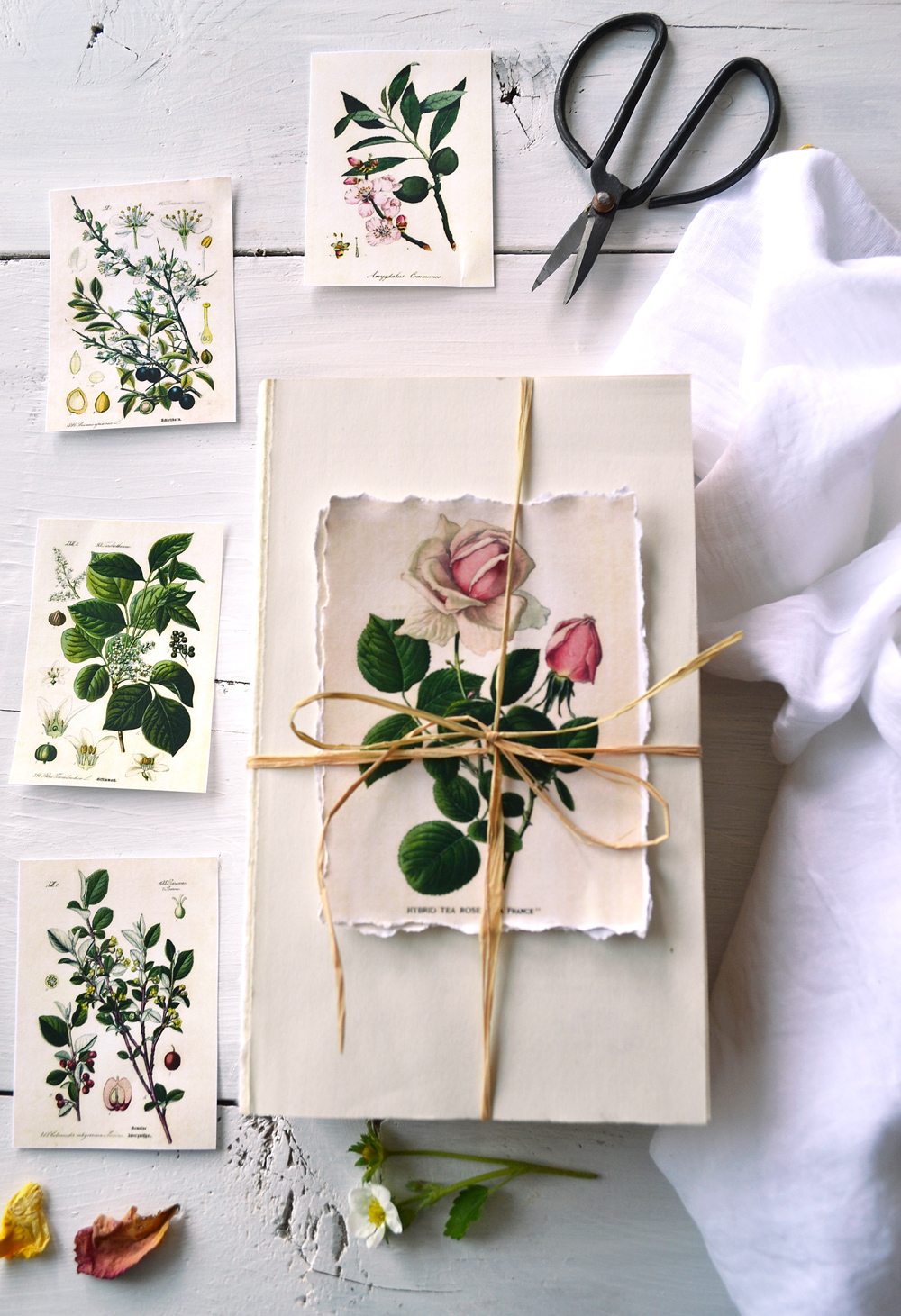 Make these amazing botanical labels with 3 types of borders that you can use for decorating farmhouse, cottage, Shabby Chic or vintage homes